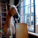 Horse Taxidermy Unicorn