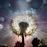 Wisdom - Seeds of Light