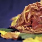 More love, dead rose!