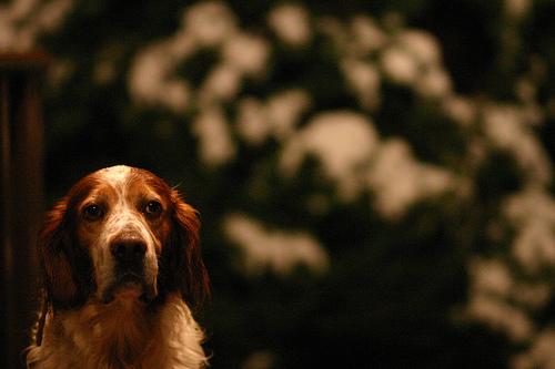 Perfect Paws Dog Grooming Ashford Kent Ashford