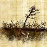 sower thorns