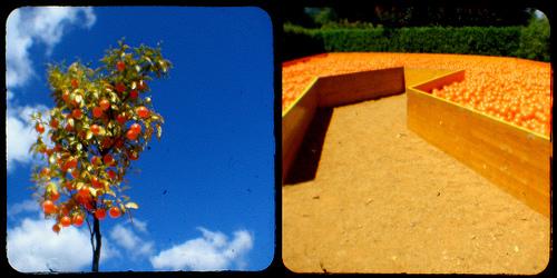 Vitamin C Tree by *brilho-de-conta