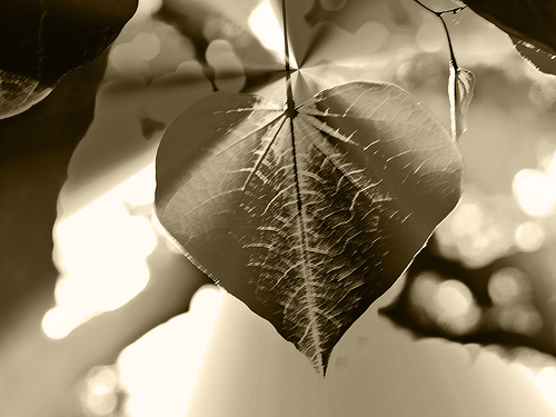 Hang My Heart Up to Dry by Jillian