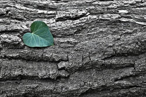 jake johnson love of nature