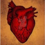The Human Heart by unknown