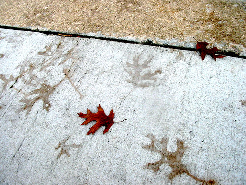 Leafprints on Footpath by Jill