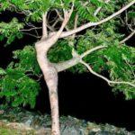 Laurel Tree, Buffalo NY
