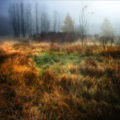 Here Sleep Deer by Stuary Williams