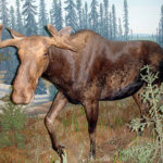 Moose by Daryl Mitchell