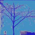 Tree of Life by Alyssa Miller
